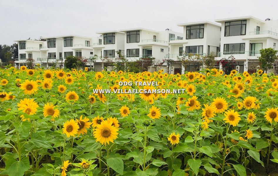 Hình ảnh biệt thự FLC Sầm Sơn